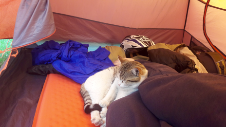 Chilling cat joining me in my tent
